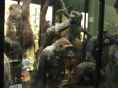 DSCF3552 (Phil D-UK) Tags: animals tring naturalhistorymuseum rothschild