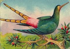 oiseauchromos 1