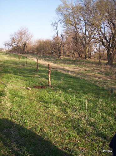 after fence posts