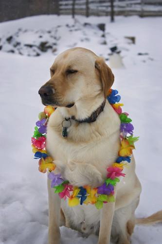 Murphy thinking of summer
