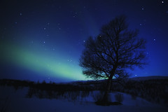 JOSHUA TREE AND A LOVELY AURORA (~~~johnny~~~) Tags: blue winter sky snow tree green stars landscape interesting heaven joshuatree explore glowing wonders northernlights auroraborealis johnnymyrenghenriksen