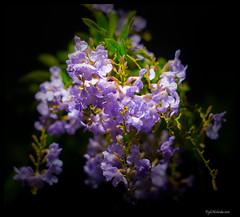Flowers for 365 Photo Tweeps