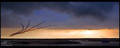 Israel Air Force  Aerobatic team, flying the  Fouga CM-170 Magister Tzukit (xnir) Tags: canon eos israel team force aviation air flight graduation academy  aerobatic nir magister fouga  iaf benyosef 50d     cm170 xnir tzukit  photoxnirgmailcom