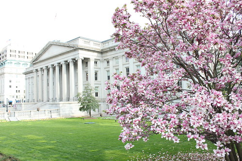 Pink Purple Flowering Magnolia Tree On The Lawn Of Department Of The
