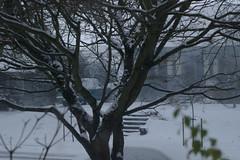 Snowday2008