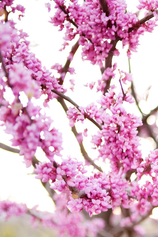 Spring-2010