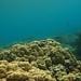 Reef at Kealakekua Bay, Hawaii