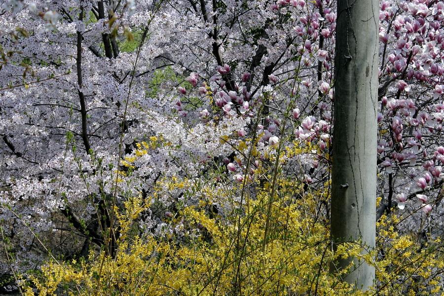 Spring blossom(1)