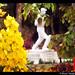 Statue of Col. C K Naidu