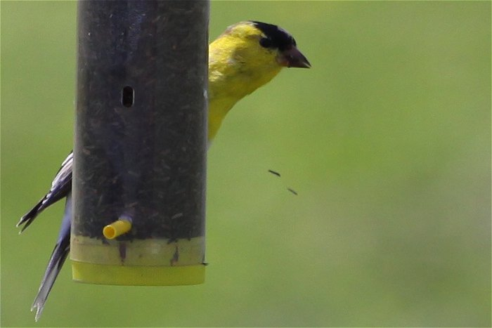 05-05-birds2