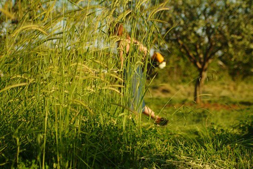 olive grove Medulin