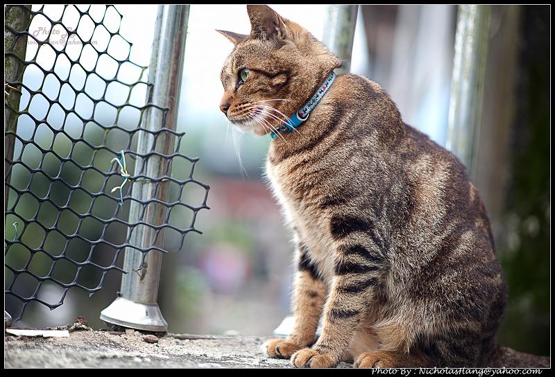 猴硐火車站的貓咪村