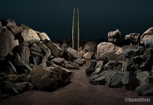 Tucson-Cactus-Rocks-2004