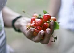 PRINTS (Sandra_R) Tags: canon cherry 50mm hand f14 prints 400d