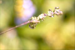 Dreamer....... (Hausstaubmilbe ( slow)) Tags: vanagram