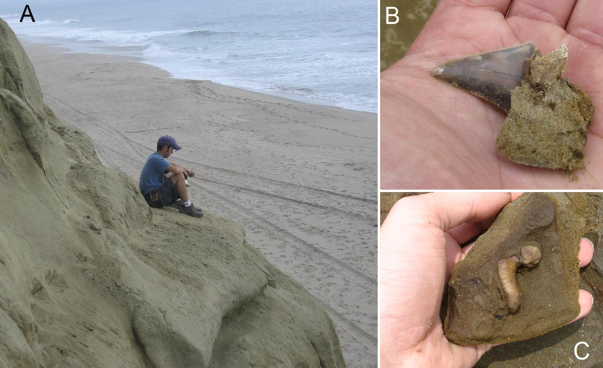 Paleontology along California's coastline