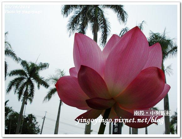 中興新村99年蓮花DSC9742