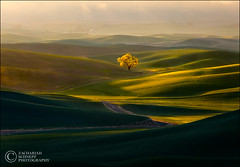 Road to Enlightenment (Zack Schnepf) Tags: morning light painterly storm tree sunrise landscape gold golden warm rich atmosphere hills explore normal zack frontpage rollinghills palouse schnepf