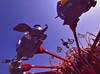 Daily Disney (Express Monorail) Tags: california ca travel original vacation usa sun classic america vintage geotagged nikon ride rss availablelight disneyland grain wideangle disney flare theme sunburst orangecounty anaheim dl themepark attraction fantasyland d300 ultrawideangle dumbotheflyingelephant disneypictures disneyparks expressmonorail disneyphotos geo:lon=117918931 joepenniston disneyphotography disneyimages geo:lat=33813781