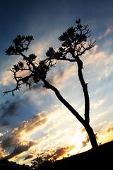 Céu do cerrado... (CissaF) Tags: sunset pordosol cerrado silueta