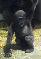 Zoo 07