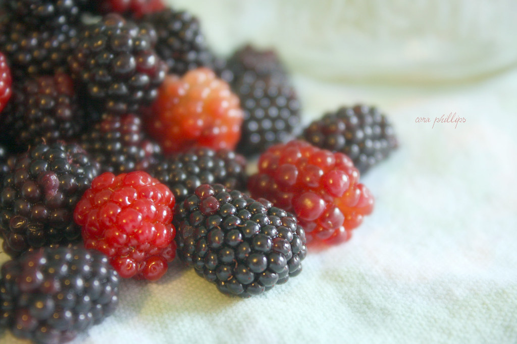 Red Blackberries