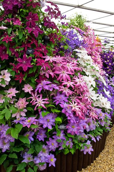 2010-05-25   Chelsea Flower Show  057.jpg