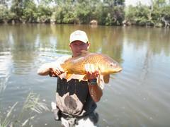 carp on a fly2