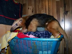 On the clothes basket