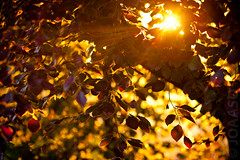 Sunset tree bokeh (Joaaso) Tags: sunset summer tree sol nature leaves sunshine oslo norway prime norge catchycolours bokeh sommer natur tre solnedgang thecafe blader solskinn canoneos5d hbw canonef200mmf28liiusm
