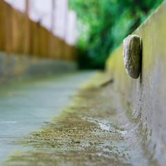 Stone (MACPIT) Tags: a550 sonyalpha550 macpit