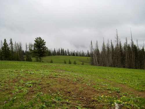 Meadow on a Cloudy Day