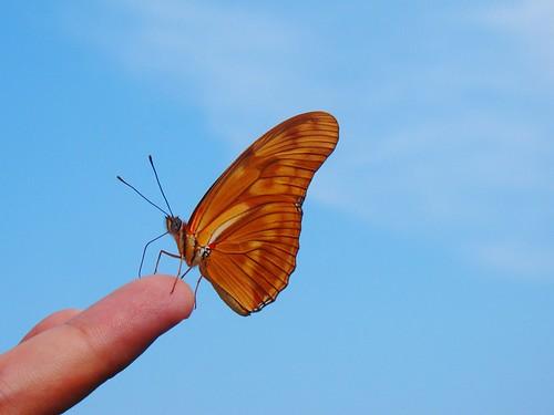Mariposa en mi mano (8)