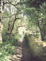 Shadowed Path (danielleyc) Tags: summer nature sunshine countryside walk sunny lancashire walkies colne canonixus95is danielleyc
