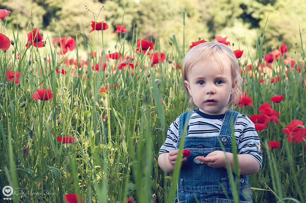 Z in a poppy field