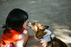 first kiss (moaan) Tags: dog 2004 girl june kid corgi nophotoshop welshcorgi pochiko gettyimagesjapanq1 gettyimagesjapanq2