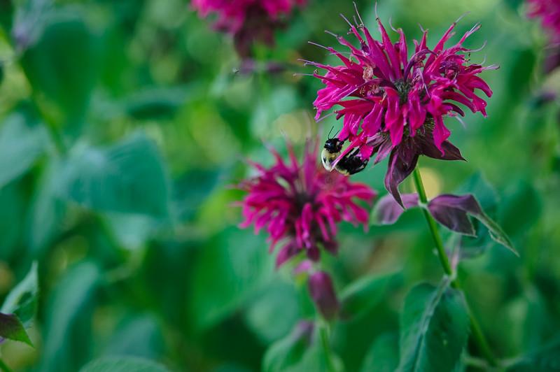 Day 253: Bee Bomb Bee