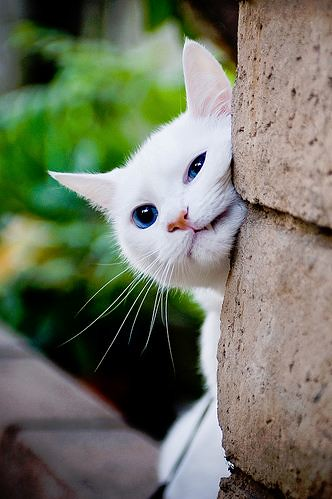 cute white rescued cat