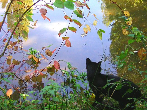 Kot nad jesiennym jeziorem