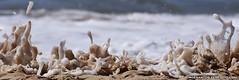 IMG_2684 (Jorge Santos72) Tags: sea beach portugal wave algarve