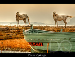 "Arab Horses (Diana Q. ^ Photography, like Oxygen"") Tags: travel horses italy art colors canon happy flickr barca italia live awesome united best join surrealist today cavalli soe lepetitprince bote galope pieceofart arabianhorses artmix caballosarabes flickrfightr dianaquiroga cavalliarabi flickraward imagesforthelittleprince flickrunitedaward tripleniceshot flickraward5 mygearandmepremium mygearandmebronze mygearandmesilver mygearandmegold mygearandmeplatinum mygearandmediamond ringexcellence dblringexcellence tplringexcellence phototrations"