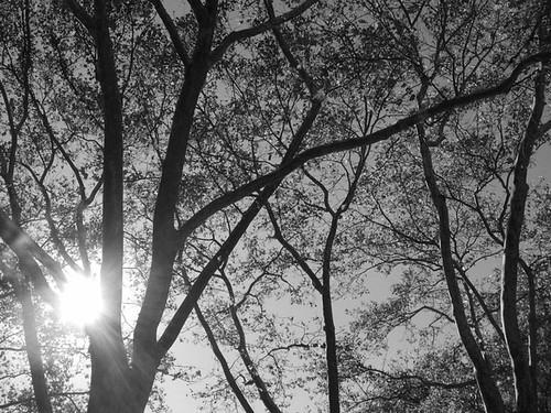 Sara Delano Roosevelt Park