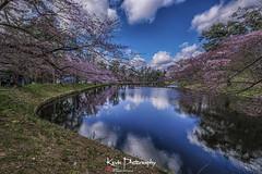 FXT24164 (kevinegng) Tags: japan aomoriprefecture hirosaki hirosakicastlepark sakura cherryblossom lake reflection 日本 青森県 弘前市 弘前公園 pond sunnyday bluesky whitecloud