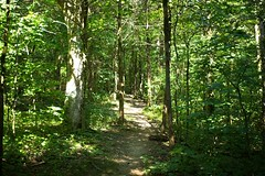 IMG_1229 (steveaylor) Tags: branson missouri taneycomo trails white river flowers