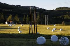 Døskeland (dese) Tags: rundballar rundballe traktorägg gaular sunnfjord sommar juni june summer june27 2017 sognogfjordane kveld evening