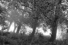 Morning fog (Red Cathedral is going to Shankra) Tags: sonyalpha a77markii a77 mkii alpha sony car oldtimer sonyslta77ii slt evf translucentmirrortechnology spartacusrun mudrun ocr strongmanrun obstaclerun redcathedral hiking alittlebitofcommonsenseisagoodthing zwartwit blackandwhite noiretblanc spain espana espagne mountain mountains cataluna catalonia catalunya organya cadimoixeronaturalpark pyrenees pyreneeen pirineus pirineos pirineu landrover defender discovery offroad offgrid 4x4 outdoors hannibal rooftent