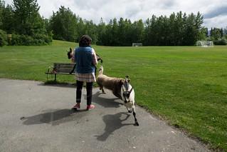 Goat Attack!  (Explored)