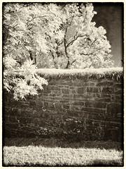 The wall (la1cna) Tags: ir720 wall monochrome monochrom olympus infrared oldbuilding skien telemark scandinavia ruin