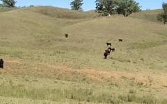 133 Jump Up Road, Barraba NSW
