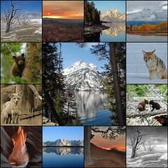 Top Faves of 2009 (dbushue) Tags: coyote autumn lake mountains southwest sunrise reflections landscapes mosaic wildlife favorites fox bryce yellowstone cubs nationalparks thermal 2009 grandteton antelopecanyon